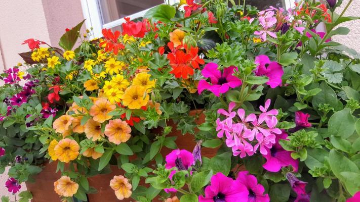 fleurissement 1